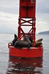Blog_07.16_Alaska (4)