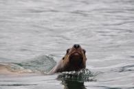 Blog_07.16_Alaska (5)