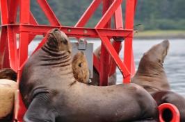 Blog_07.16_Alaska (6)