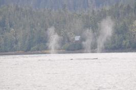 Blog_07.16_Alaska (7)