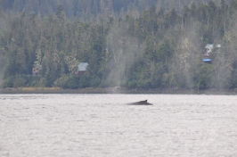 Blog_07.16_Alaska (8)