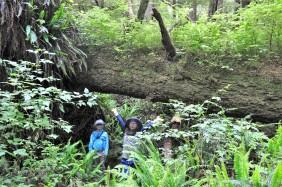 Alexander found this huge nurse log