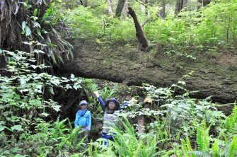 Alexander found this huge nurse log