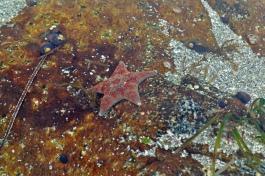 Sea life everywhere